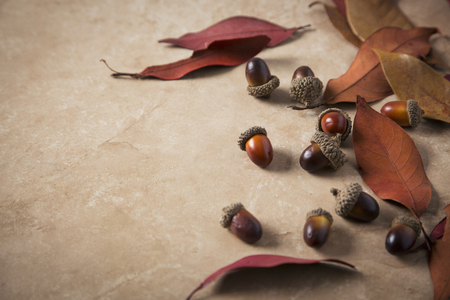 Autumn Objects - maple leafs, coffee, dry flowers, sweet persimmon 110
