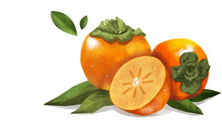 Orange fruit and plant design, expressive of summer 013 Illustration