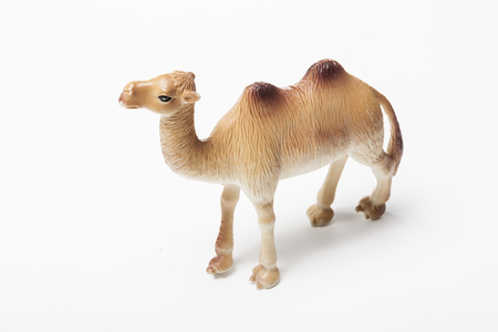 A camel figure isolated on white background