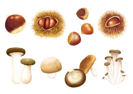 秋のオブジェクトのイラスト - キノコの異なる種類