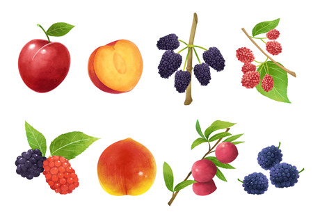Autumn object illustration - different kind of fruits