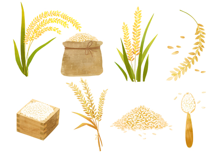 Autumn object illustration - different type of paddy that makes rice