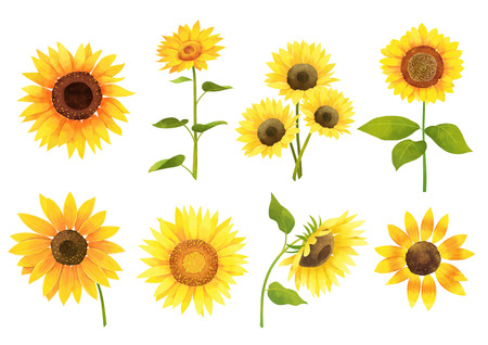Autumn object illustration - sun flowers Stock Illustratie