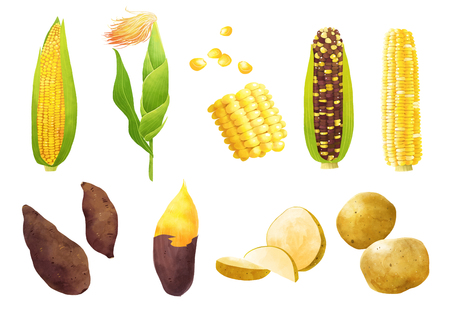 Autumn object illustration - Corn and nuts