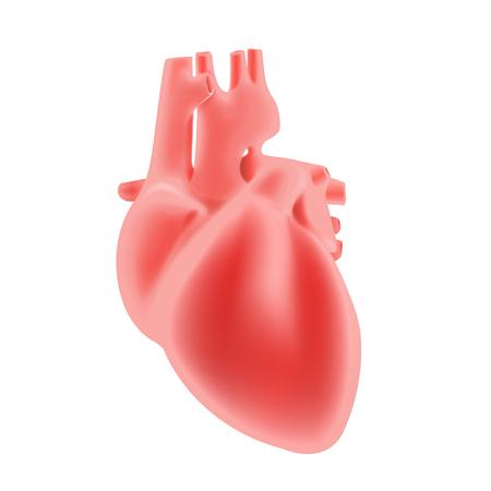 Human internal organs detailed. Vector illustration