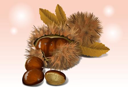 Objetos de frutas: el castaño, maduro y sabroso. Ilustración de vector