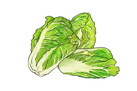 Cabbage icon Stock Illustratie