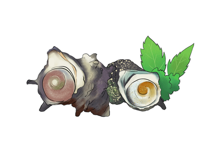 Vector - seasonal fresh food illustration. kind of marine products  with white background.