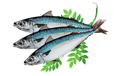Vector - seasonal fresh food illustration. kind of  marine products with white background. Ilustrace