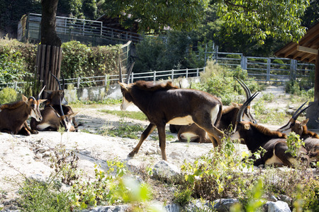 Animals in a zoo. various wild animals photo. 073