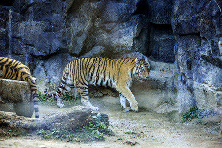Animals in a zoo. various wild animals photo. 132