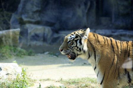 Animals in a zoo. various wild animals photo. 103