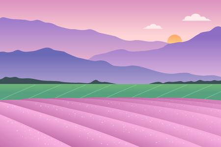 Lavender field vector illustration.