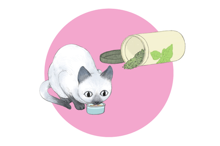 Illustration of a lovely and cute cat