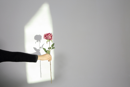 Hand gestures photo. Hand holding a stalk of flower. 版權商用圖片