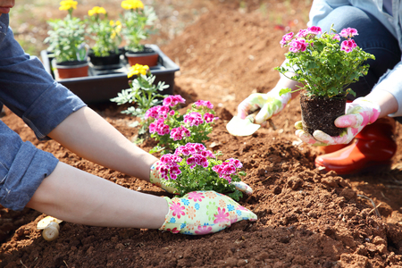 Ecology concept photo, gardening in a vegetable garden in spring 110 Stock Photo