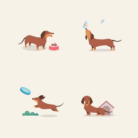 Animal icons collection vector illustration 002 矢量图像