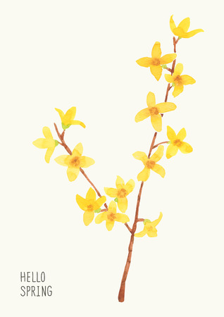 Blossoming tree branch with spring flowers background 6