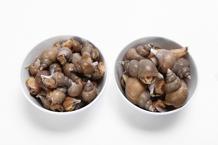 fresh whelk on plate, white background