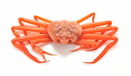 red snow crab, white background