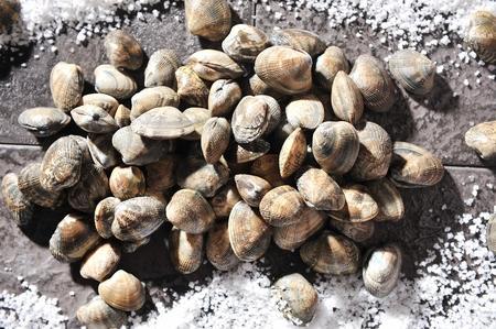 manila clam and salt on table Banco de Imagens
