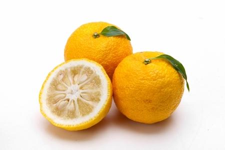 citron, yuja fruits on white background