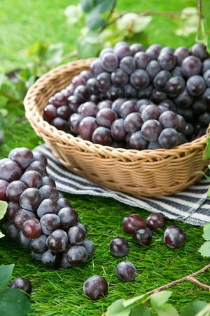 bunches of grapes on artificial grass and in basket, creative concept Imagens