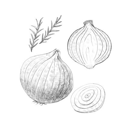Hand drawn sketch vegetables illustration