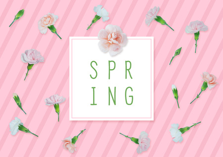 Spring background with carnations.