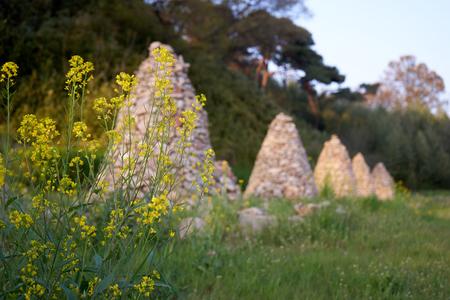Yellow rape flowers in nature Stockfoto - 122840518