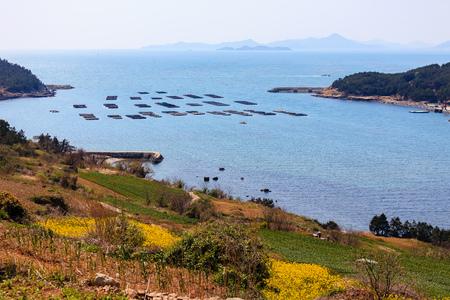 Beautiful rape flower island