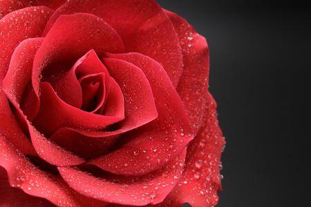 Nahaufnahme von frischen Blumen, schöne Blume