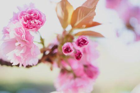 Close up of fresh flowers, beautiful flower