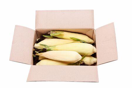 Box full of not cut, not open corn