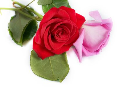 A bouquet of red and pink roses with box on white background Foto de archivo