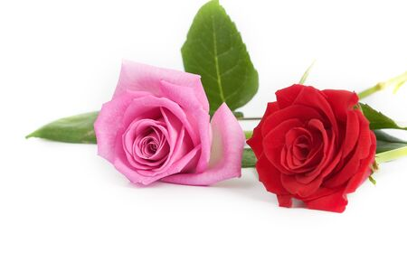 A bouquet of red and pink roses on white background