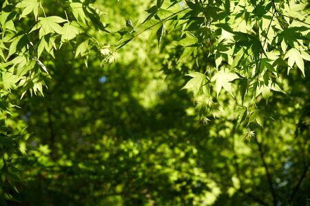 Green leaves Imagens