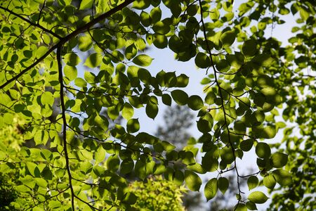 Green leaves and sky Imagens