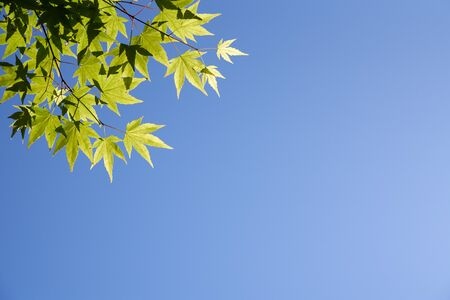 Blue sky and green leaves