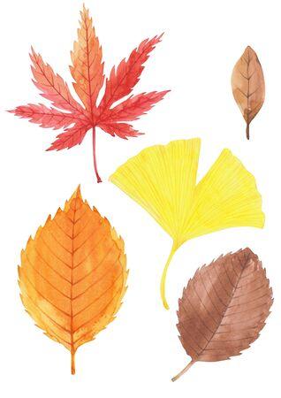 Set of autumn leaves watercolor illustration.