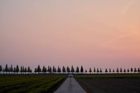 beautiful sunset view of Metasequoia road in Korea