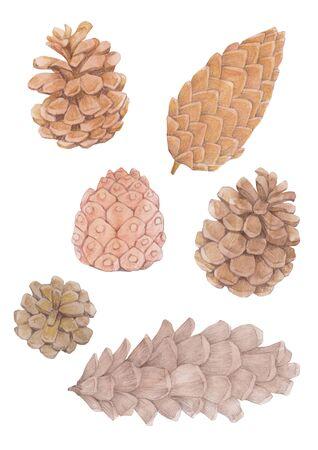Set of pine cones watercolor illustration. Imagens