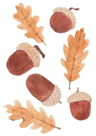 Set of acorns watercolor illustration.