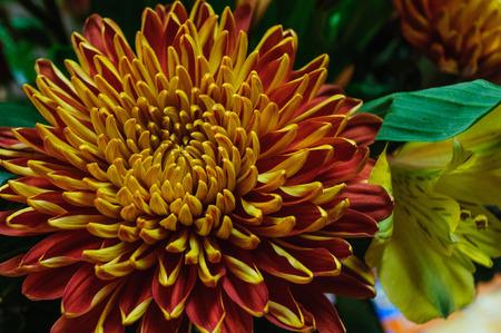 Beautiful Orange and Yellow Flower