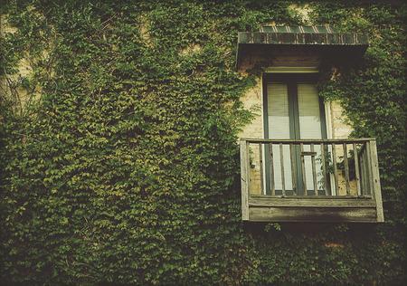 Green Ivy Vine on Building, Window and Balcony Stock Photo