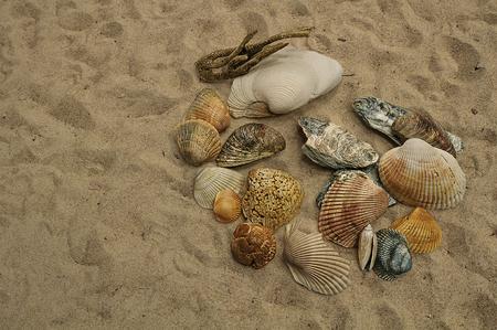 All types of ocean seashells lying on the Ocean Sand Stock Photo
