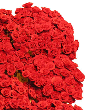 dozens: Dozens of Fresh Red Roses on White Background Stock Photo