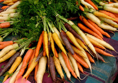 Display of Fresh Multicolored organic carrots at Farmers market