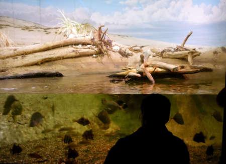 aquarium visit: Silhouette of Man Watching Fish in Aquarium Display