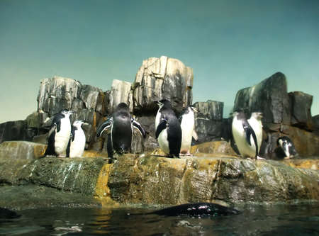 refuge: Group of Penguins Playing in Animal Refuge Stock Photo